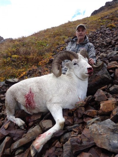 Tom Reisinger (Dall Sheep)
